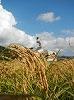 田庭 ひびき家 若狭町のお米農家さん 低農薬や不耕起にてお米作りを行っており、若狭への移住の際にとてもお世話になった方!今もいろんな面でサポートして頂いています!